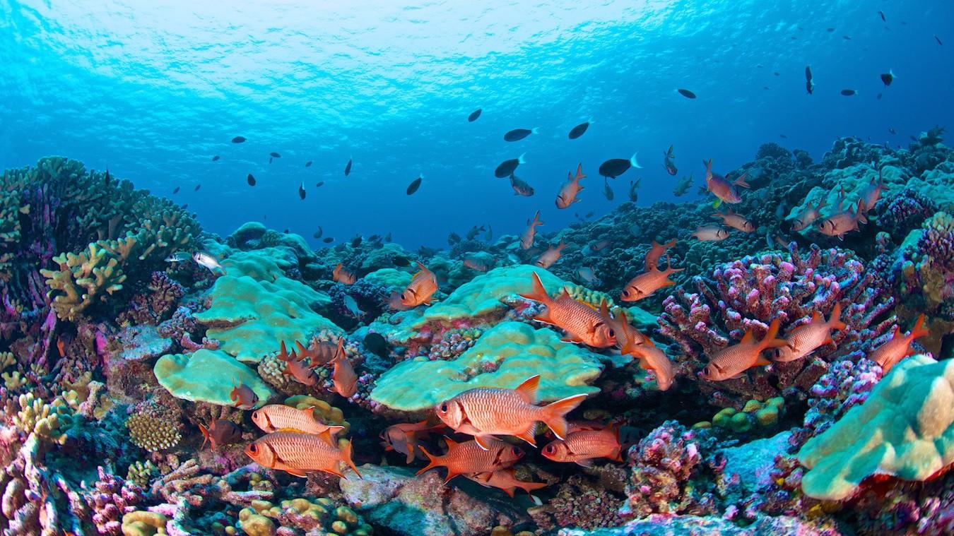 Tahiti Private Diving